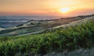 Debut des Tenuta di Trinoro 2017 begleitet von einem neuen Weißwein