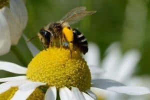 EDEKA und WWF: Bio-Apfelsaft gibt's jetzt mit Artenschutz-Plus