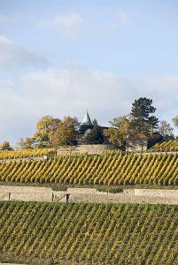 Das sind die Schönsten Weinsichten 2020