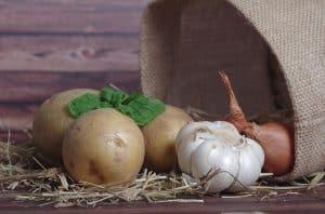 Kartoffel pflanzen