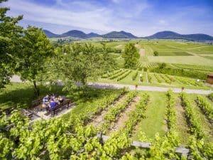 Neuer Picknick-Service der Südlichen Weinstrasse für Genuss zwischen Wald, Wein und Wiesen