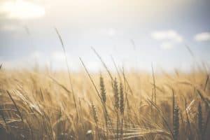 Demeter-Aktionswochen fordert: Ackerland gehört in Bauernhand!
