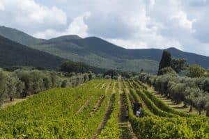 Weinklassiker des Jahrgangs: Le Serre Nuove dell'Ornellaia 2018