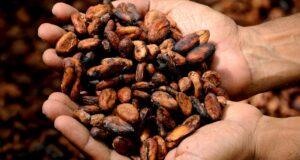 Neue Forschungsergebnisse: Kakao-Fehlaromen sicher erkennen