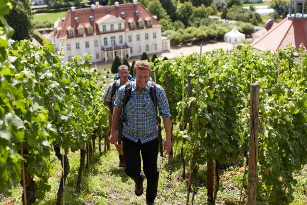 schloss wackerbarth weinbergswanderung (c) sachsen tourismus.de